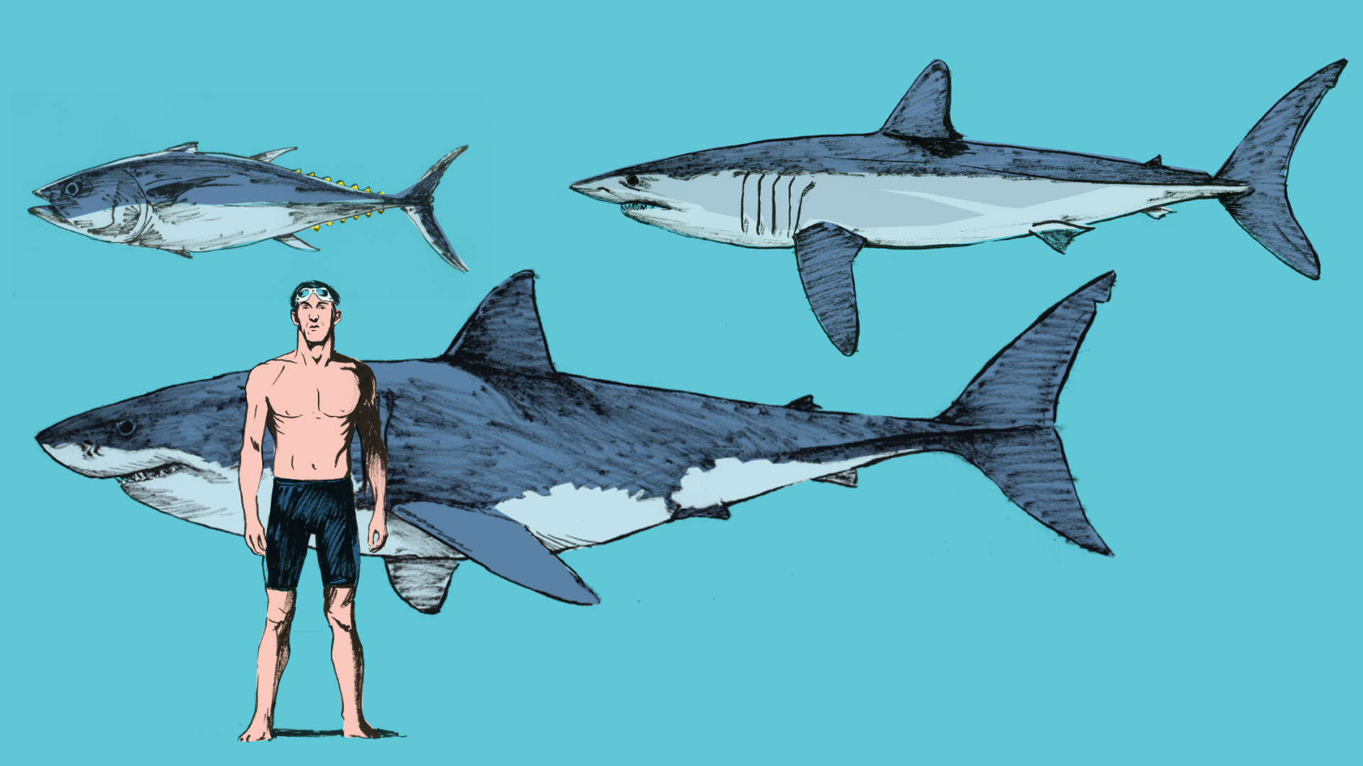 Images Of Sharks What Makes Mako...