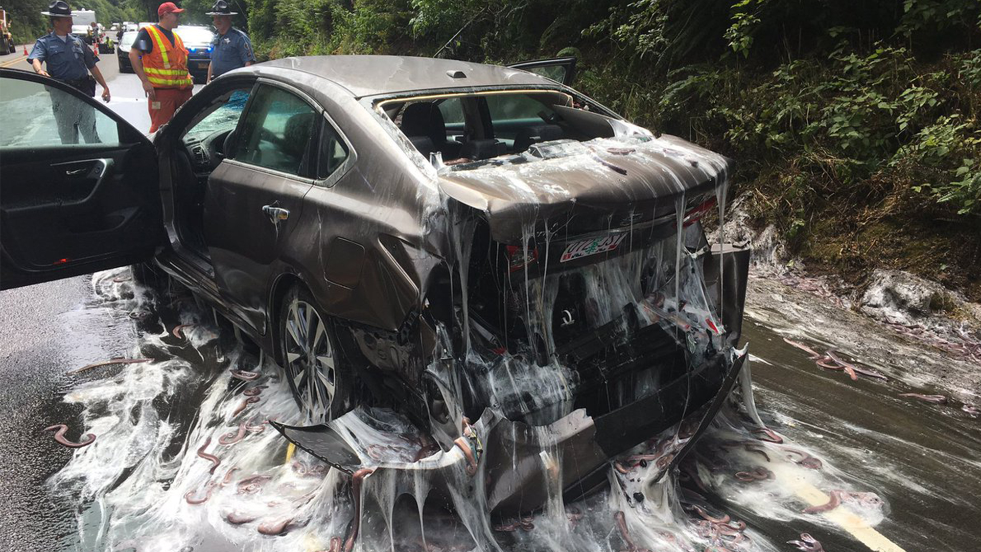 Watch: \'Slime Eels\' Explode on Highway After Bizarre Traffic Accident