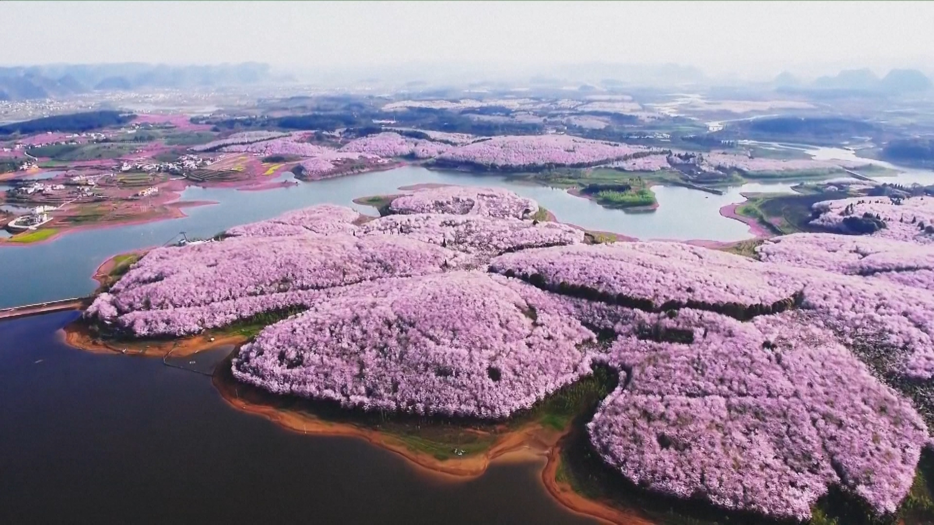 Cherry Blossoms and Other Beautiful Flowers Usher in ...