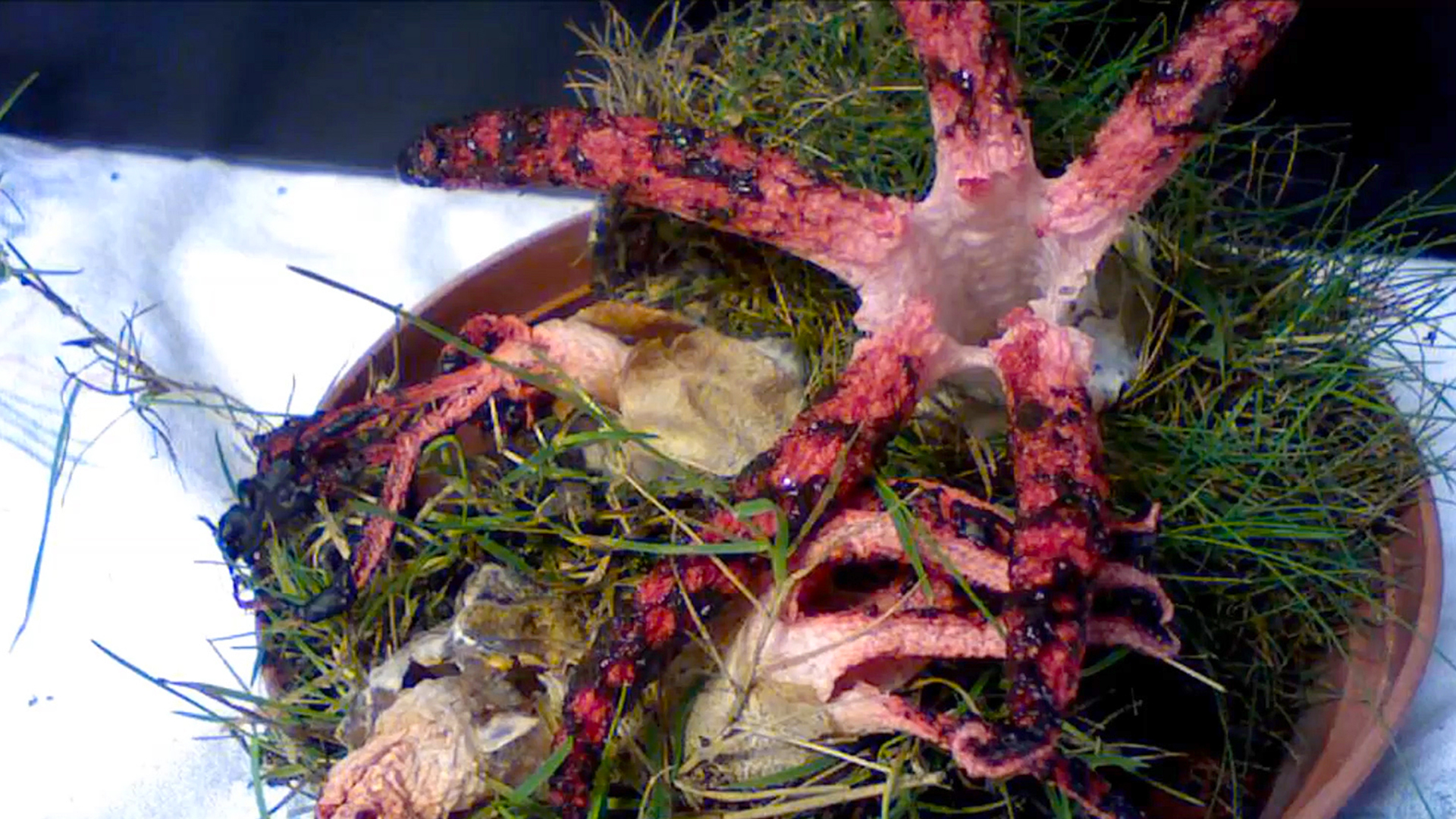 this sprouting octopus like fungus is the stuff of nightmares