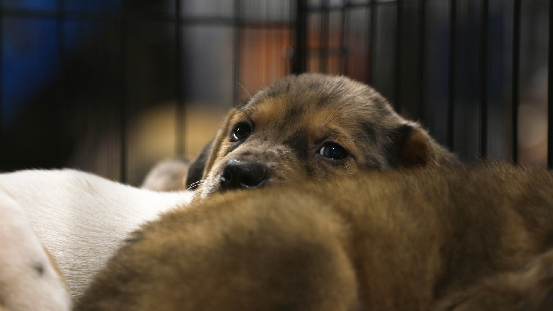 How to Save Your Pet's Life in a Natural Disaster