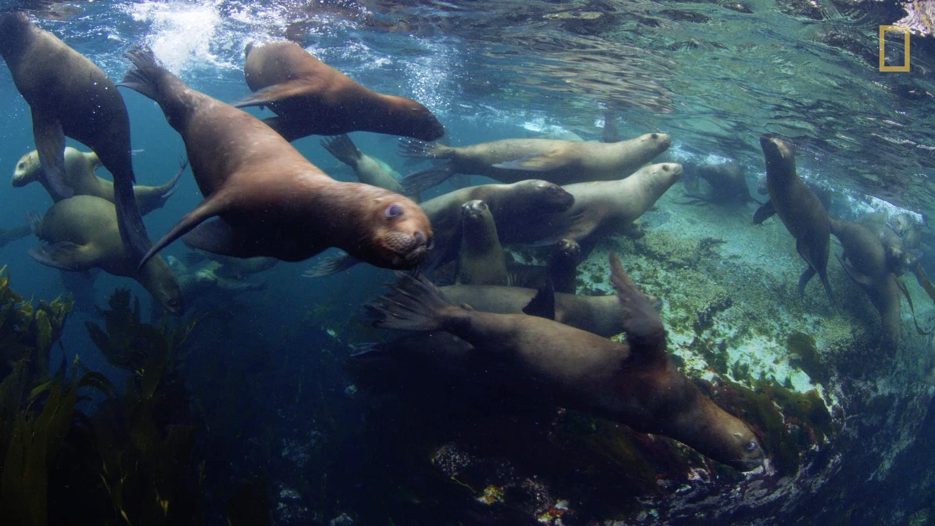 Tiny Home Square Footage Three New Marine Parks Protect Stunning Biodiversity