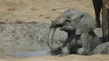 """Orphaned Baby Elephants """"You Can't Help But Fall In Love With"""""""
