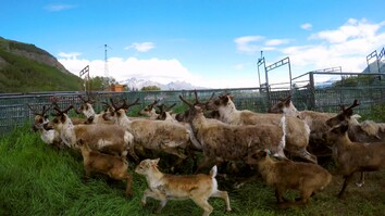 A Reindeer Checkup