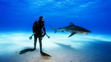 Mission Critical: The Misunderstood Shark