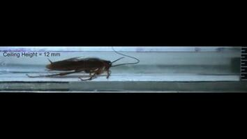 Watch: Cockroaches Survive Squeezing, Smashing, and More