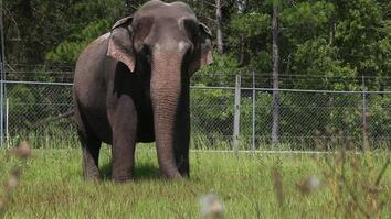 When Ringling Bros. Retires Its Elephants, This is Where They Live
