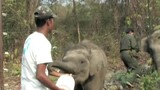 Elephants, Rhino Freed in India