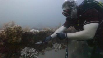Divers Clean Reefs to Save Marine Life