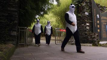 Undercover Pandas