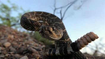 NG Live!: Joel Sartore: The Snake Show