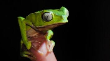 Tracking Frogs In the Amazon Rain Forest
