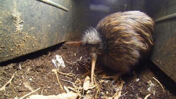 Bizarre, Furry Bird Gets a Closer Look