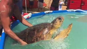 Endangered Sea Turtle Rescued After Selfie-Takers Nearly Kill It
