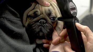 Dr. Oakley, Yukon Vet: Painful Puggy Eyes