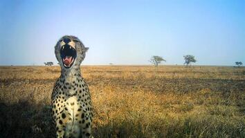 Animal Selfies From the Serengeti