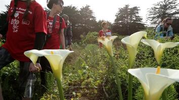 BioBlitz Finds 2,300+ Species in Golden Gate Parks