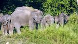 Wild Indonesia: The Smallest Elephant on Earth