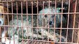 Dog Meat Sales Continue at Chinese Festival Despite Expected Ban (GRAPHIC VIDEO)