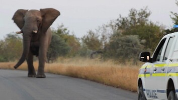 Watch: This Charging Elephant Is Probably Just Having Fun
