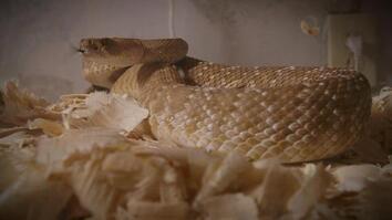 The Snake Room