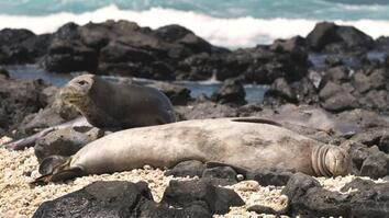 The Strange—but Necessary—Task of Vaccinating Wild Seals
