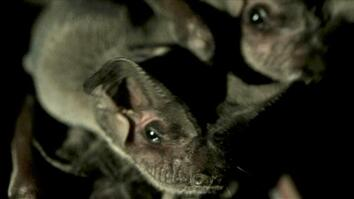 Bats Eat Bugs So You Don't Have To
