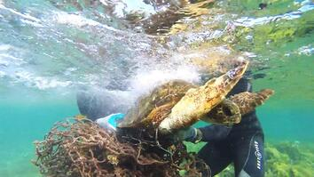 Sea Turtle Rescue: Tangled in Fishing Net