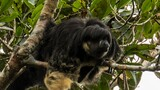 Watch: Mysterious Amazon Animal Seen for First Time in 80 Years