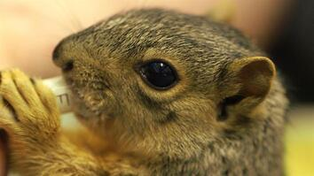Cute Squirrels Get a Second Chance At Life in This Rehab Center