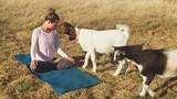See Why These Cute Little Goats Are the Latest Yoga Craze