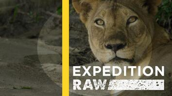 Ride Along With a Team of Lion Protectors