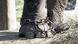 Unchaining Captive Elephants in Nepal