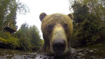 Watch What a Grizzly Does with a Floating Camera