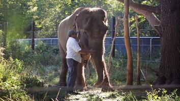 Elephant Caregiver Killed, Will Be Missed