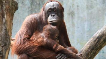 Meet Six Awesome Animal Moms