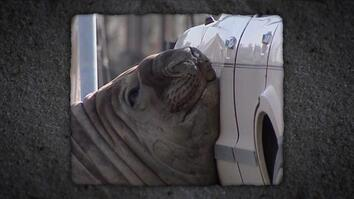 Car Crushing Seal