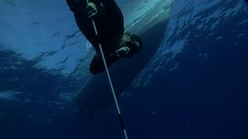 Tagging Silky Sharks