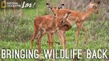 A Park Reborn: Bringing Wildlife Back