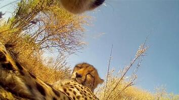 Through the Eyes of a Cheetah