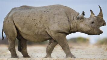 NG Live!: Tracking the Rare Black Rhino