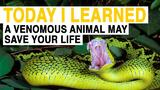 TIL: A Venomous Animal May Save Your Life