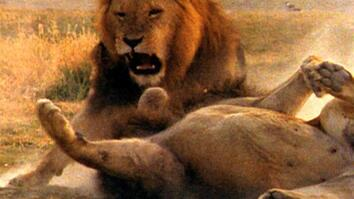World's Deadliest: Lion vs. Lion