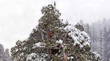 NG Live!: Super Trees: Climbing a Giant Sequoia