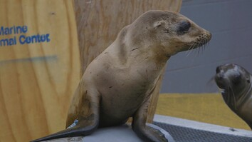 Orphaned Sea Lion Pups Get a Second Chance