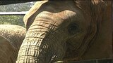 Talking Elephant?