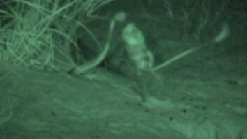 Watch a Kangaroo Rat Jump-Kick a Snake to Escape