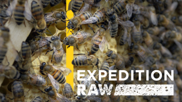 Would You Walk Into a Room With Millions of Bees?