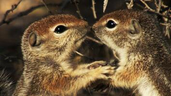 America's National Parks: Squirrels Just Wanna Have Fun