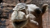 Guelta Archei